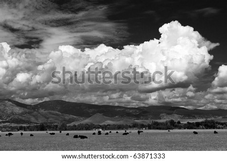 Clouds And Cows Over The Colorado Plains and Foothills - stock photo