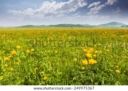 cloudscape,meadow and wildflowers in spring - stock photo