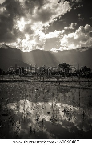 Cloudy Blue Sky Reflect in Rice Paddy Field - stock photo