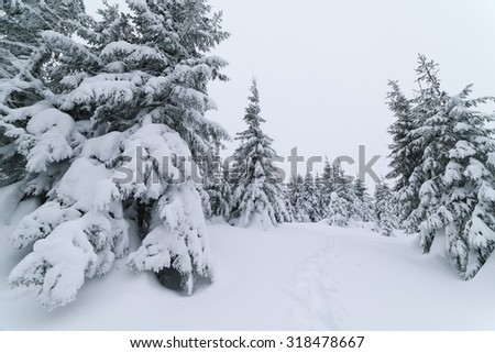 Cloudy day in the forest. Winter landscape with footpath in the snow. Fir trees - stock photo