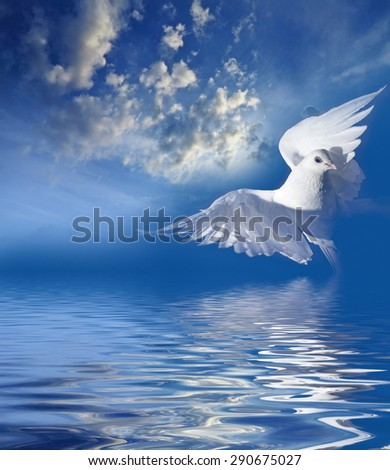 cloudy sky and white pigeon - stock photo