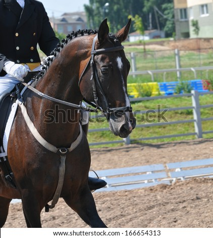 Clouse-up of rider and horse  - stock photo
