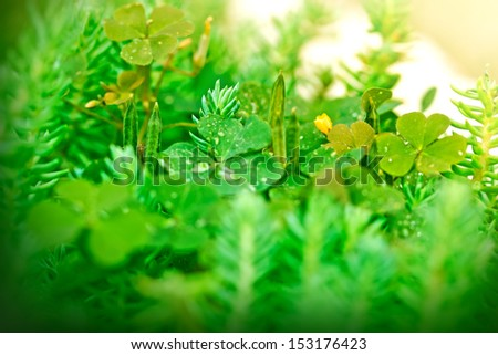 Clover and unusual plants - stock photo