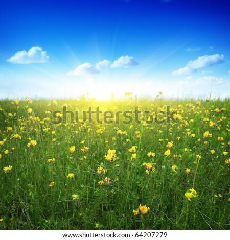 Clover field,blue sky and sun. - stock photo