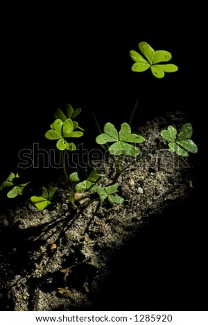 clover in the ground lighted with a ray of light - stock photo