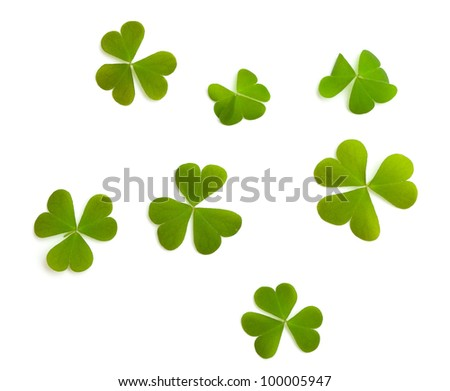 clover leafs isolated on white - stock photo