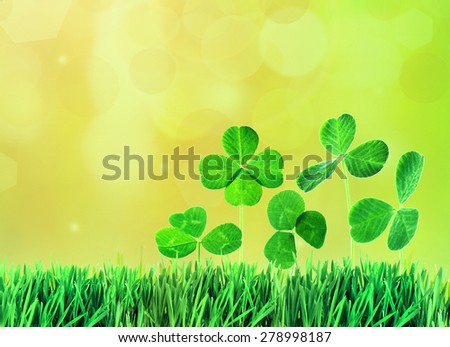 Clover leaves in grass on bright background - stock photo