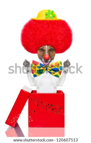clown dog with red wig and hat jumping out of the box - stock photo