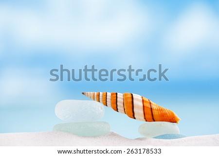 clown sea shell with ocean , beach and seascape , shallow dof - stock photo