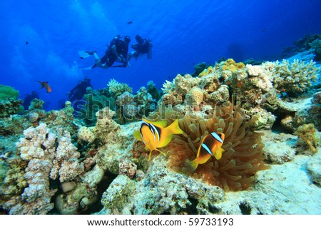 Clownfishes and Scuba Divers - stock photo