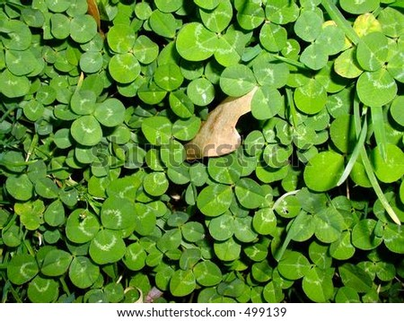 Clump of Clover - stock photo