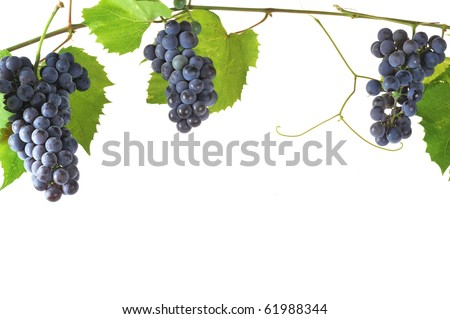 cluster fresh grape  with leaves, isolated - stock photo