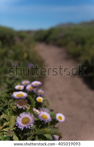 Cluster of blooming flowers by a hiking path on the Pacific Coast - stock photo