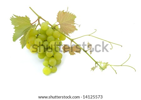 cluster of green grapes on  branch isolated on white - stock photo