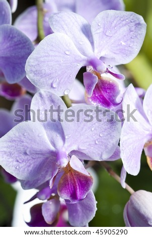 Cluster of purple and white orchids - stock photo