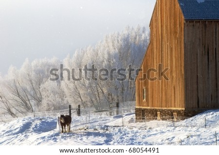Clydesdale horse and winter frost - stock photo