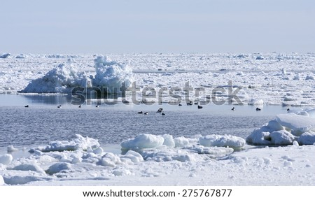 Coast, coastline and shore of the Baltic Sea in March during the day, hours when the ice at sea breaks up. Sunny day by the sea. Birds in a pond this side. - stock photo
