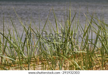 Coast of the Baltic sea. - stock photo