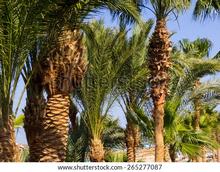 Coastal landscape with palms tree. Tropical plants on the island. Summer landscape - exotic background for your concept of travel on the coast. , - stock photo
