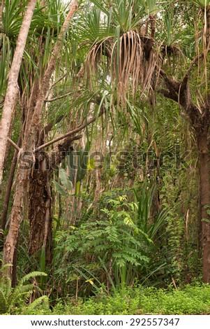 coastal scenery near Yorkeys Knob, Cairns, Queensland, Australia - stock photo