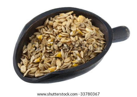 cob (corn, oats, barley) horse feed on a rustic wooden scoop, isolated on white - stock photo