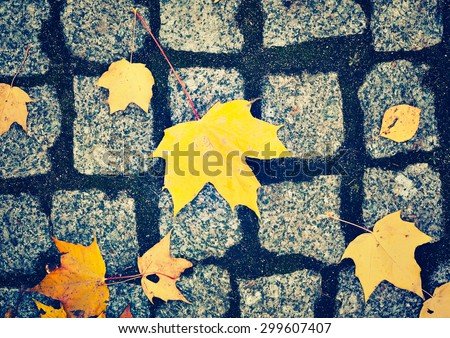 cobblestone pavement and yellow leaves in autumn, vintage style - stock photo