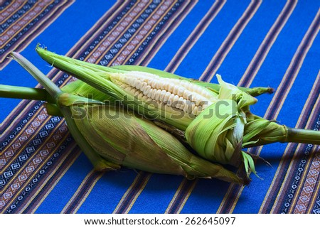Cobs of white corn called Choclo (Spanish), in English Peruvian or Cuzco corn, typically found in Peru and Bolivia (Photographed with natural light)      - stock photo