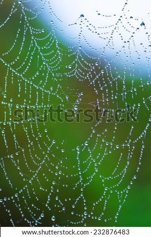 cobweb spider against green light with dew drops like a necklace of pearls bright - stock photo