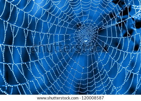 Cobweb with dew drops on a blue background - stock photo
