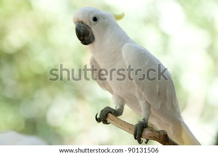 cockatoo in the park - stock photo