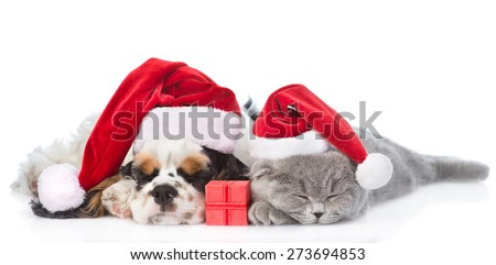 Cocker Spaniel puppy and tiny kitten with gift box sleeping in red santa hat. isolated on white background - stock photo