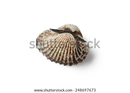 cockle on white background - stock photo
