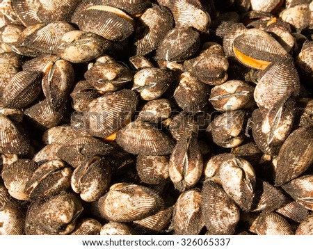 Cockle sale for cooking at small market in Asia - stock photo