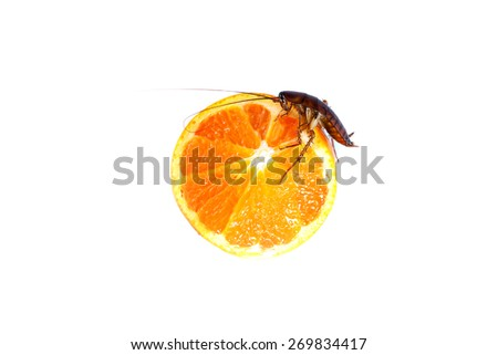 cockroach  eating orange   Concept of cleanliness. Clean food storage - stock photo