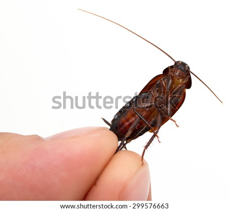 cockroach in hand - stock photo