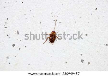 Cockroach on wall - stock photo