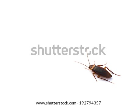 cockroach on white with copy space - stock photo