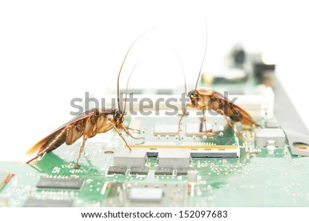 Cockroaches climbing on circuit board to present about computer attacked from virus infection - stock photo
