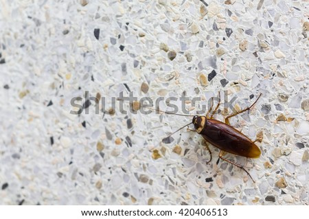 Cockroaches in the bathroom - stock photo