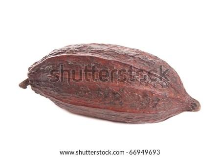 cocoa bean on white background - stock photo