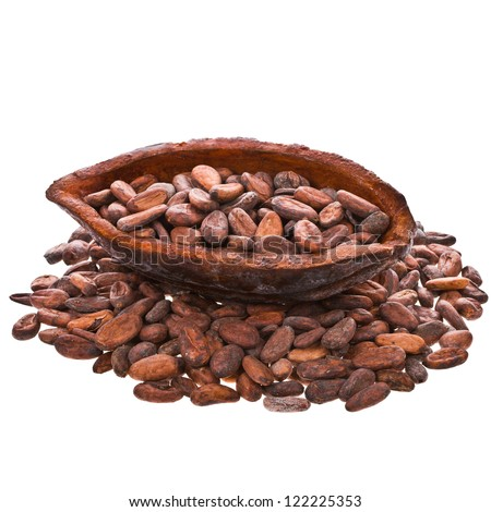 cocoa beans into cocoa fruit isolated on white background - stock photo