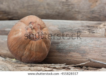 Coconut. - stock photo