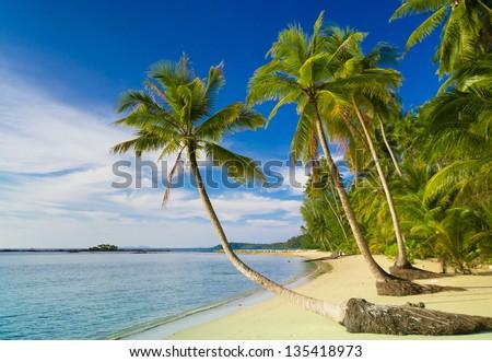 Coconut Coast Jungle Lagoon - stock photo