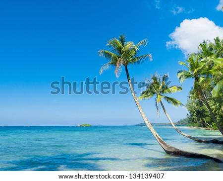 Coconut Coast Serenity Shore - stock photo