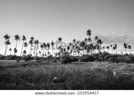 coconut grove - stock photo