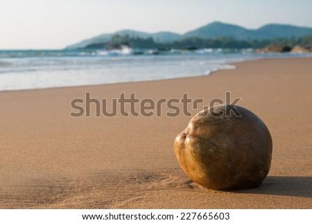Coconut on the beach - stock photo