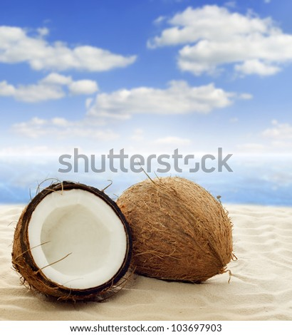 coconut on the beach near see with sky and clouds - stock photo