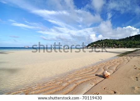 Coconut on the sand beach - stock photo