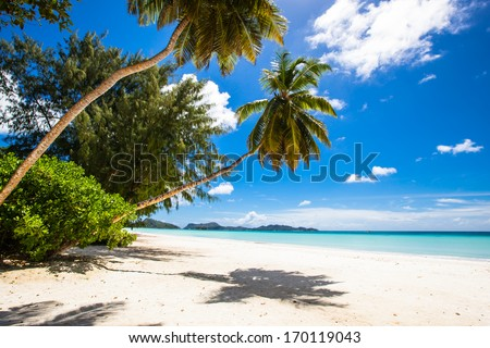 coconut palm and exotic trees at a tropical beach with white sand, turquoise sea and a blue sky with some clouds - stock photo
