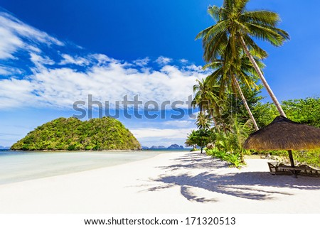 Coconut palm on the beauty beach with turquoise water - stock photo